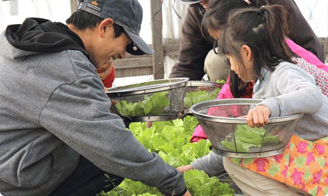 有機無農薬の農作物づくり